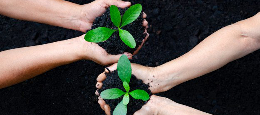 plante qui pousse entre des mains